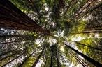 Rotorua: Out & About