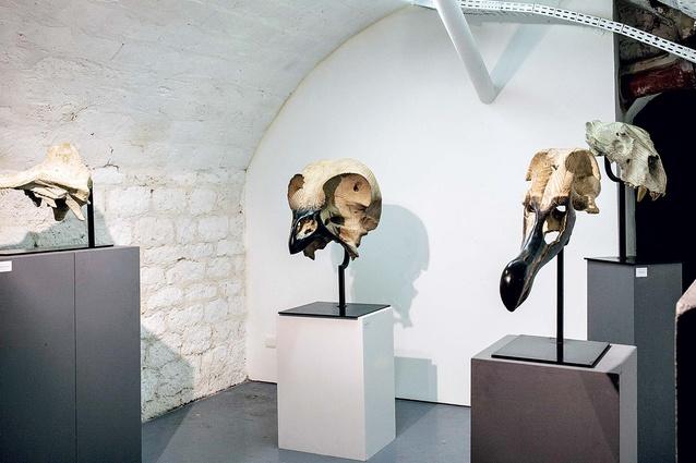 Quentin Garel skulls on display.