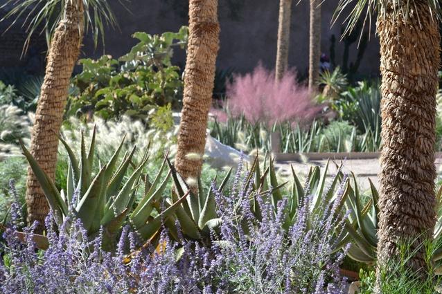 Le Jardin Secret, Marrakech garden by Tom Stuart-Smith (where Andy Hamilton worked as an associate for ten years).