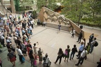 Contesting the future: Forecast Festival of Landscape Architecture