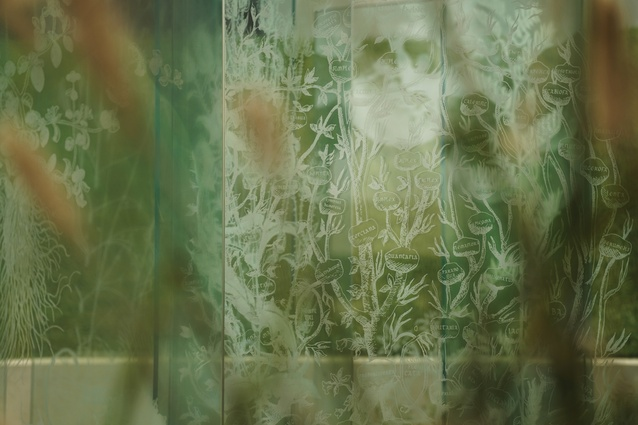 White images derived from historic drawings of the botanical and horticultural world are presented like specimens suspended in the glass.