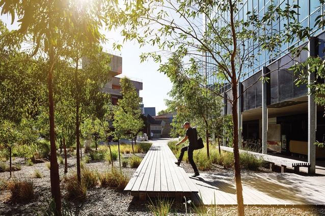 A sequence of timber platforms functions as boardwalks, seating and plinths.