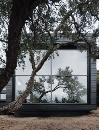 A tea tree dictated placement of a floor-to-ceiling window.