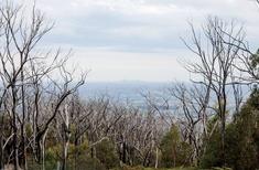 In search of bushfire architecture
