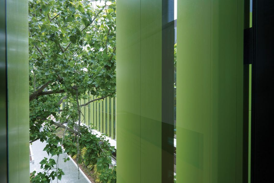 Views to established trees and gardens form an essential element of the Lowy Centre.