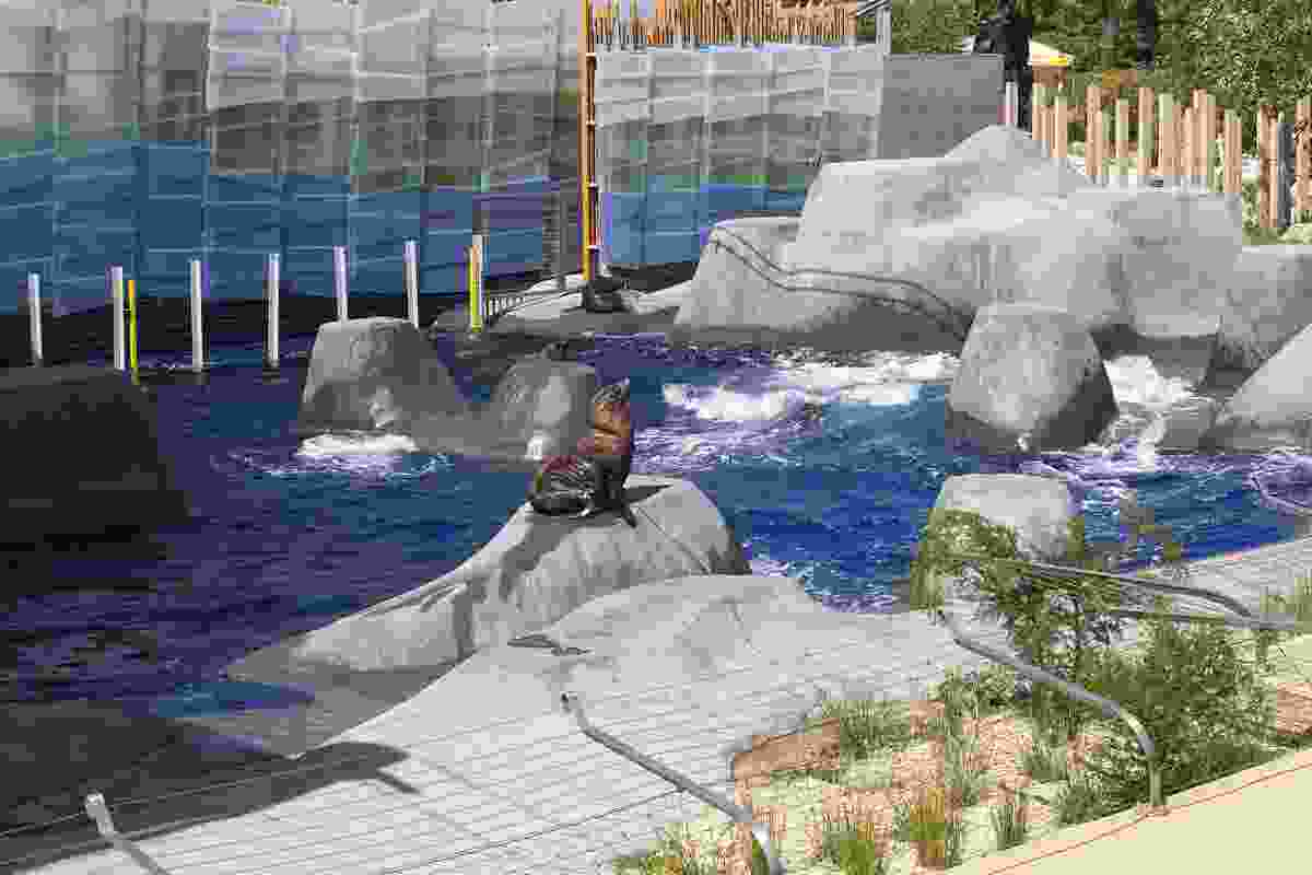 The custom designed enclosure maximises views of the seals as they move around their new environment.