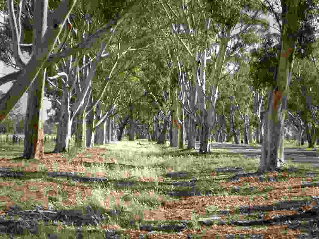 The Calder Memorial Avenue of Honour in Shepparton was was shortlisted in the 2019 Victorian Tree of the Year Awards.