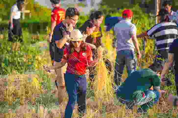 Staff and students participating in the harvest of the rooftop crops at Puey Learning Center at Thammasat University in Rangsit by Landprocess.