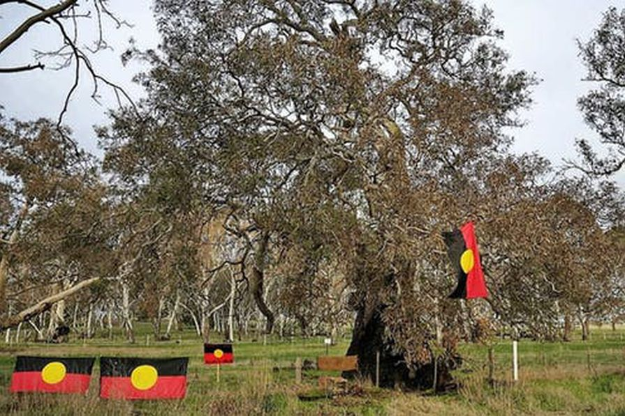 The government intends to destroy Djab Wurrung sacred trees and sites to upgrade the Western Highway at the same time as it seeks heritage status for the Eastern Freeway.