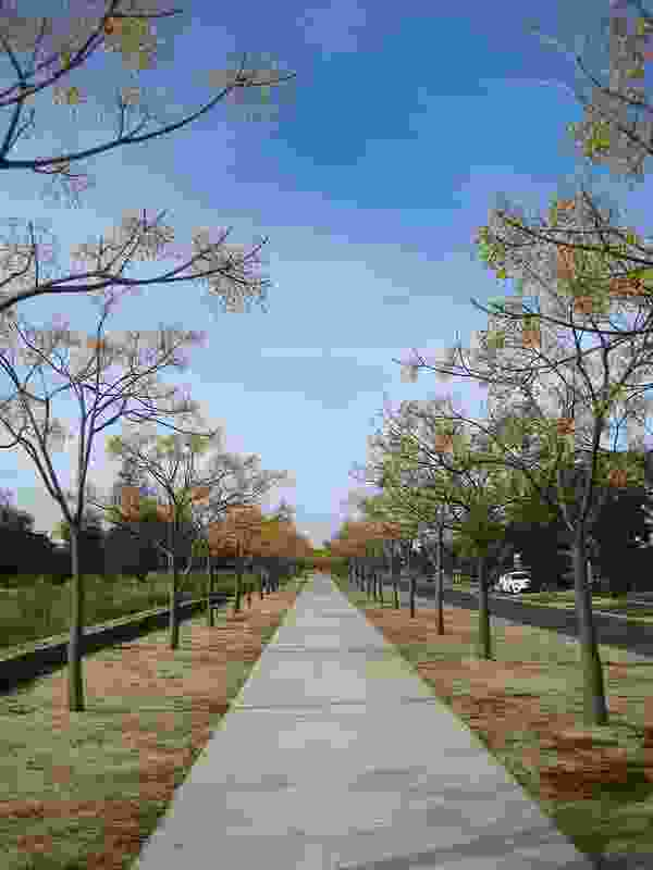 Walking paths are lined with trees to create elegant avenues.