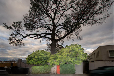 Crowdfunding sought to replant tree sheltering Boyd's Walsh Street House