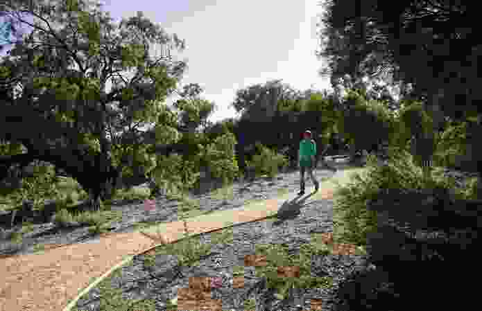 Pathways ensure walkers have new options for exploring the landscape.