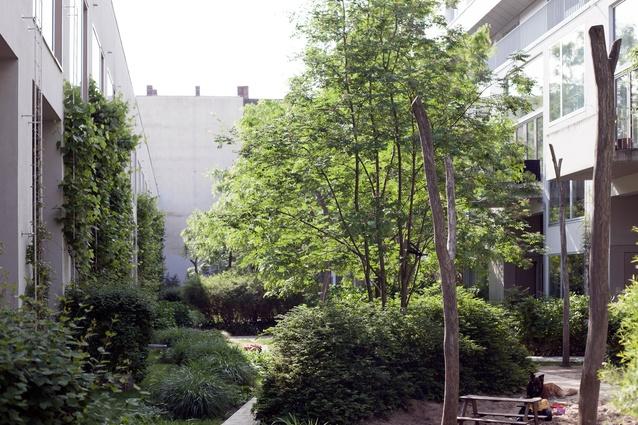 Courtyard of Ze05 Baugruppe housing project by Zanderroth Architeken.