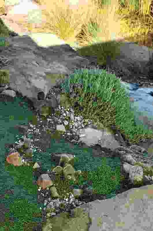 Vaucluse Garden by Jane Irwin Landscape Architecture with Bates Landscape.