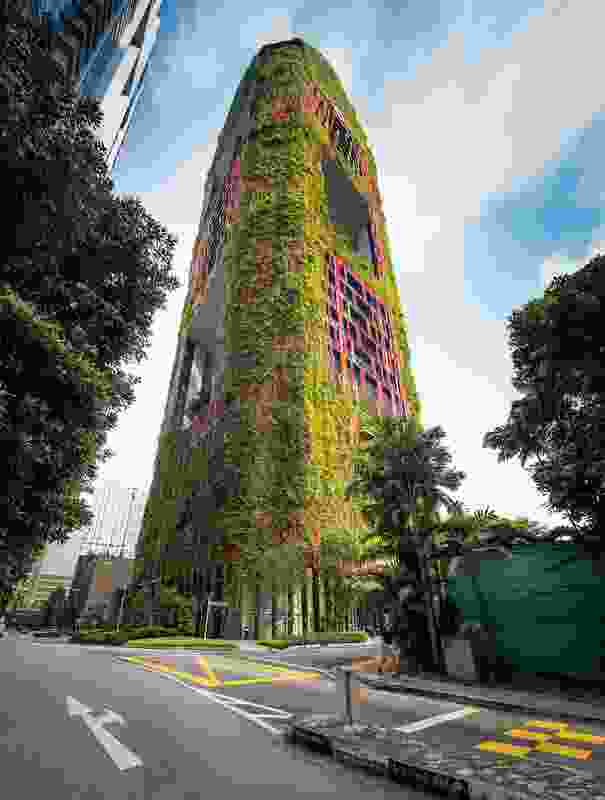 STX's work on the Oasia Downtown Hotel reimagines airspace as landscape space: an evolving mosaic of climbing plants wraps the facade, reducing glare and providing new habitat.