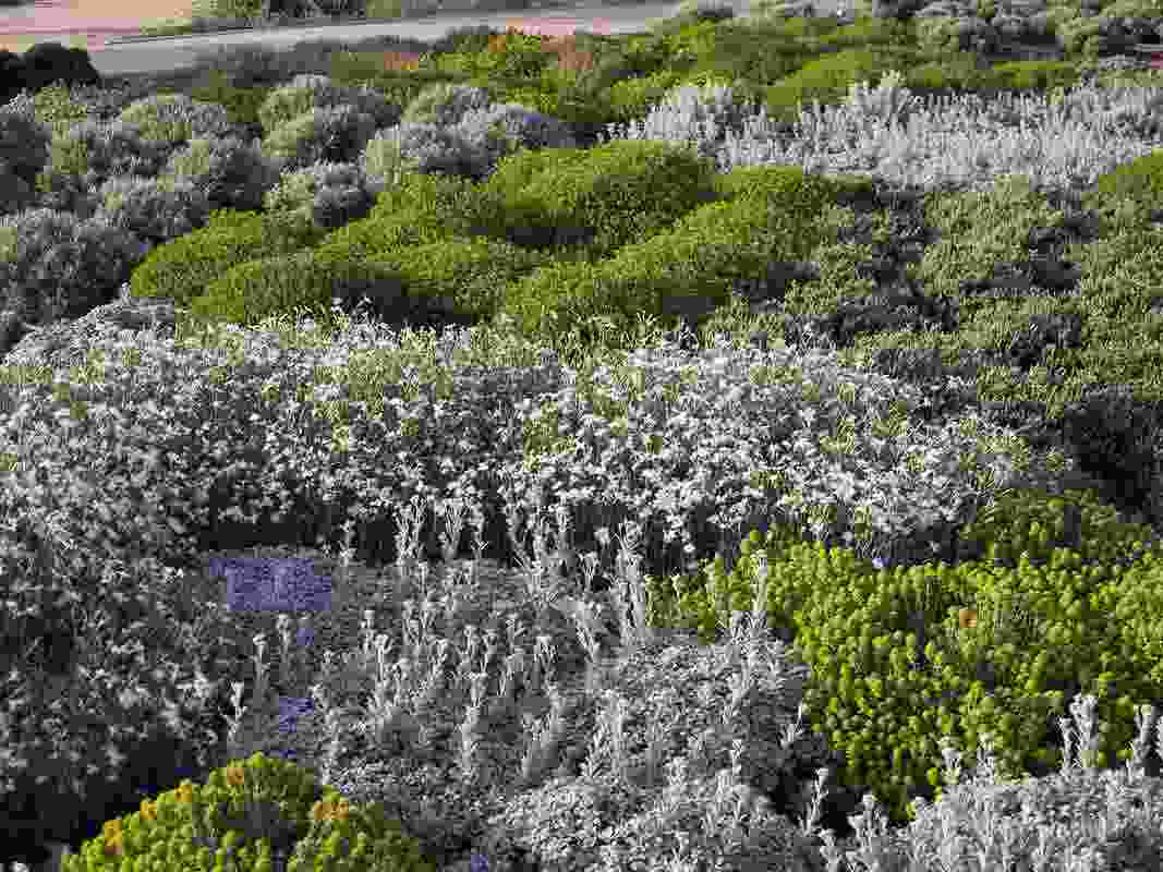 Drifts of scented ground covers and perennials carpet the areas between park paths.