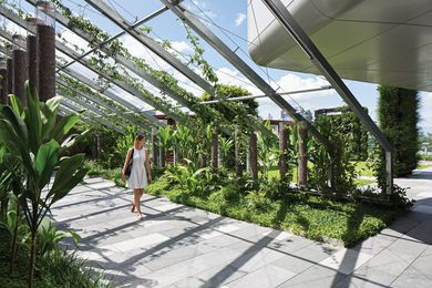 Lush, tropical vegetation is fast enveloping the steel arbour in the Secret Garden.