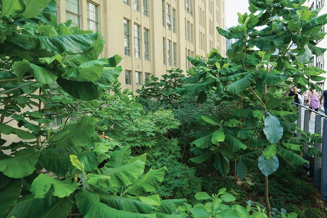 Due to their elevated nature, the High Line gardens must endure tough conditions, freezing more quickly and heating up more rapidly than other New York gardens.
