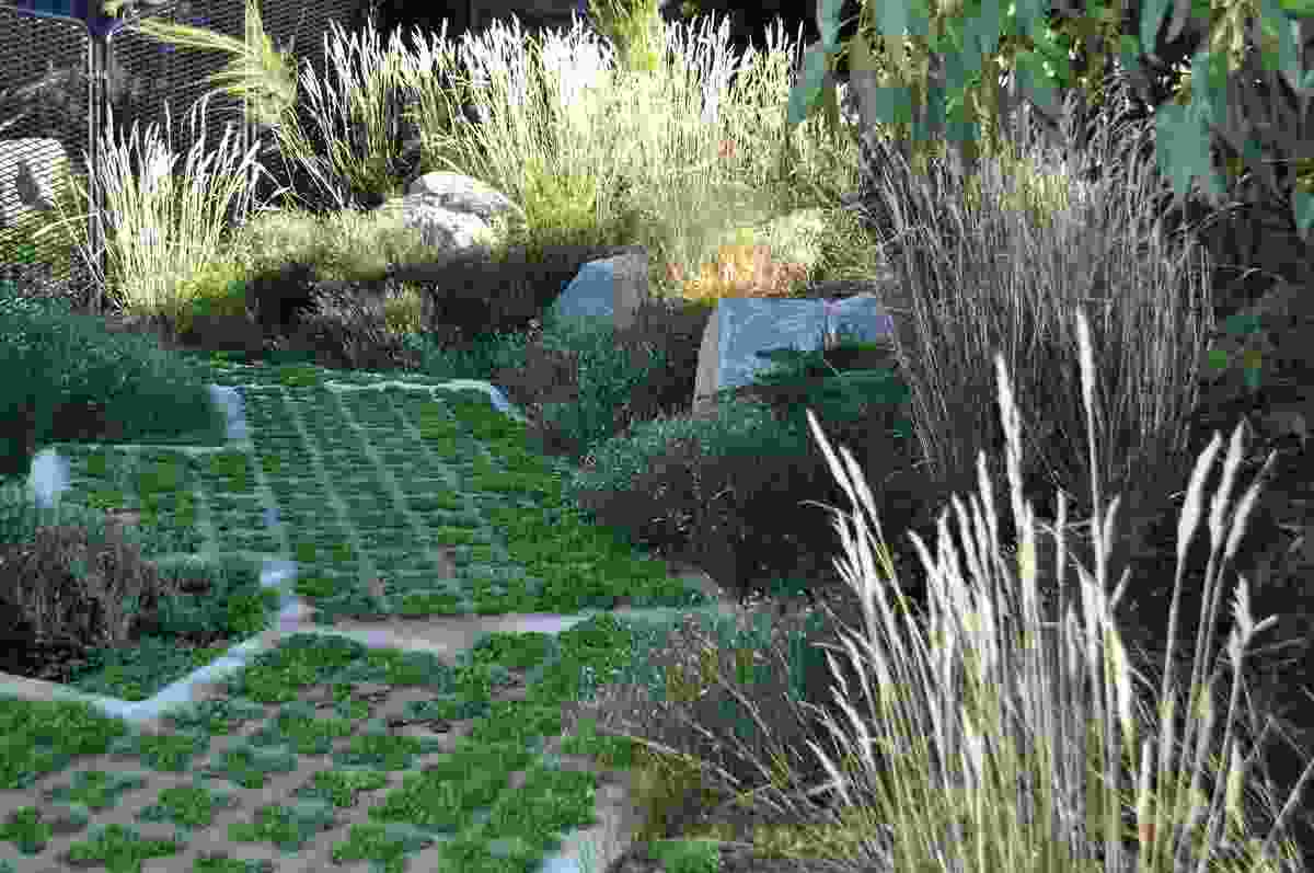 Dichondra repens (kidney weed) pokes through grasscrete paving while a green carpet of groundcovers is punctuated with tufts of strappy leaf plants, such as Dianella tasmanica (Tasman flax-lily).