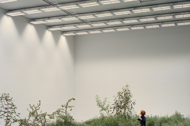 <I>Repair</I> by Baracco and Wright Architects and Linda Tegg.