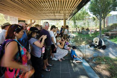 A chilled rock in the freestanding viewing pavilion passes under the glass, coaxing the resident panda closer to the audience.