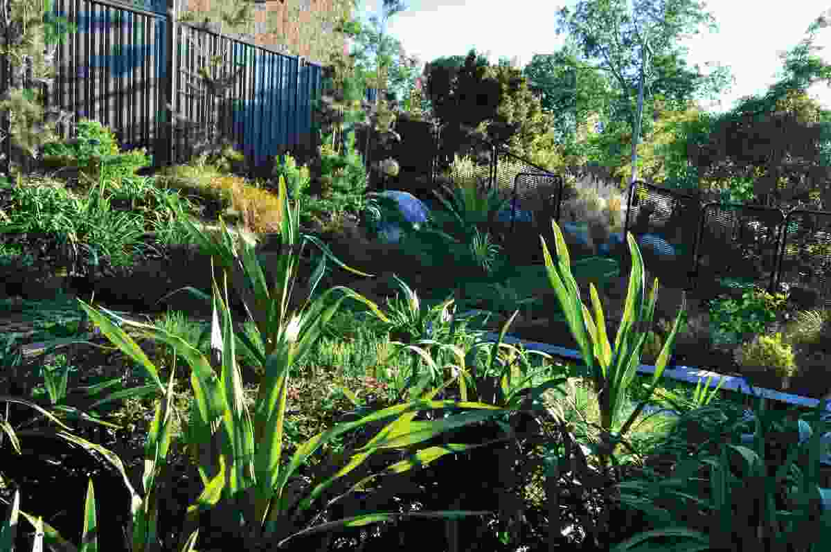 The front section of the garden hosts largely indigenous plantings, with the addition of Doryanthes excelsa (gymea lily), and extends to include the nature strip.