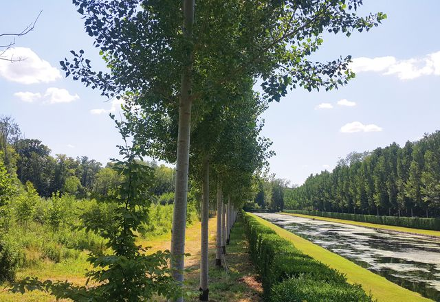 New forest and palisade along the Grand Canal at the Château de Courances in France, with hedge, lawn, tree row and gridded forest beyond.