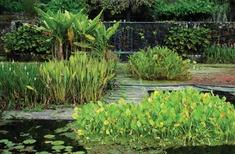 Postcard: Fazenda Vargem Grande by Roberto Burle Marx
