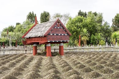 The Te Parapara garden at Hamilton Gardens is New Zealand's only traditional Maori productive garden. The garden showcases traditional practices, materials and ceremonies relating to food production and storage.