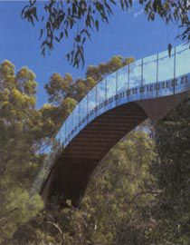 The bridge offers the visitor access to the upper tree canopy.                                    Images: Martin Farquharson
