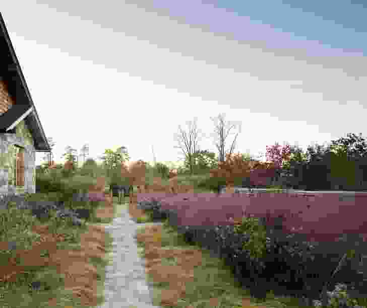 Native Meadow, Virginia by Nelson Byrd Woltz Landscape Architects. Muhlenbergia capillaris (pink muhly grass), creates a pink wash across the horizon when it's in bloom.