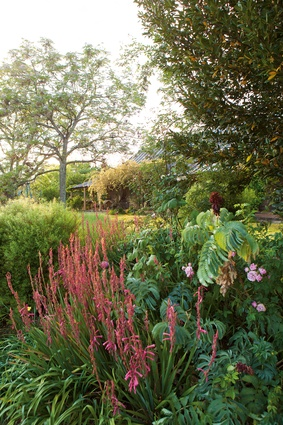 The colonial garden at Cox's Cottage, at Mulgoa, west of Sydney, features white cedars, a bunya and a hoop pine, and a Chinese elm along with hedges of African olives, and clumps of watsonias, tulbaghias and freesias.