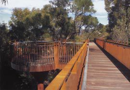 Looking along the elevated walkway through the tree canopy, with the Balga Lookout to the left.