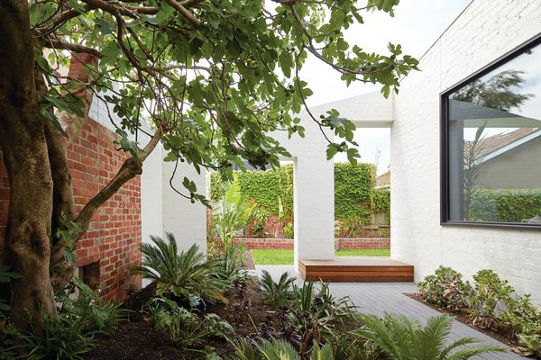 An outdoor room to the west of the living area is reserved purely to celebrate a fig tree.