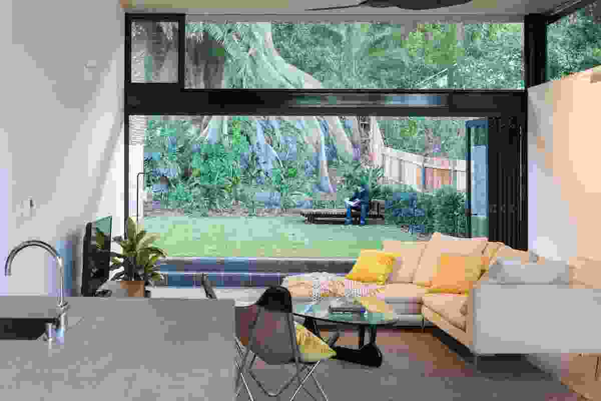 The full-height glass doors frame the heritage-listed Moreton Bay fig tree.