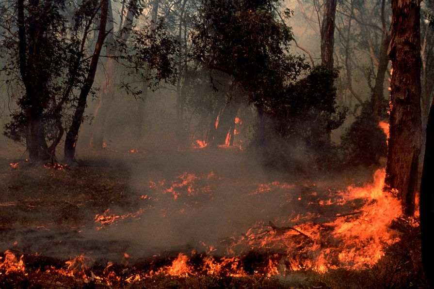 """""""Be open and listen"""": Tim Hart on landscape architecture and post-bushfire recovery"""