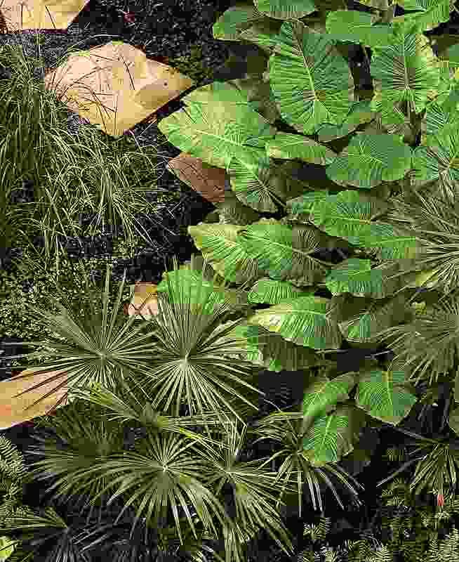 Ecosciences Precinct: All new plants at the Ecosciences Precinct are pure species local native plants.