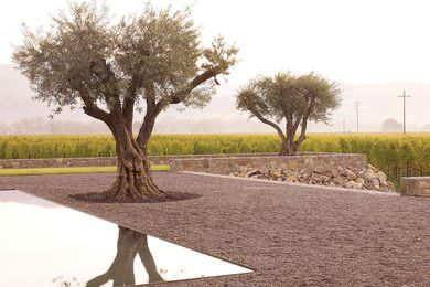 Designed by Andrea Cochran (an international speaker at the 2011 Australian Landscape Conference), specimen olives anchor the planar landscape at Walden Studios, California.