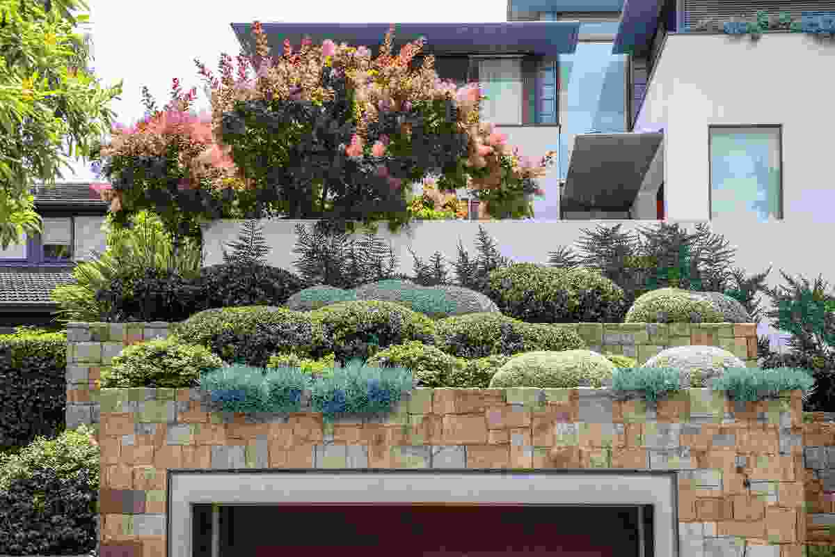 At Spirit Level's Bellevue Hill garden, rigid architectural geometries temper sandstone walls and sculptural hedging, accented by the occasional frangipani or smoke bush.