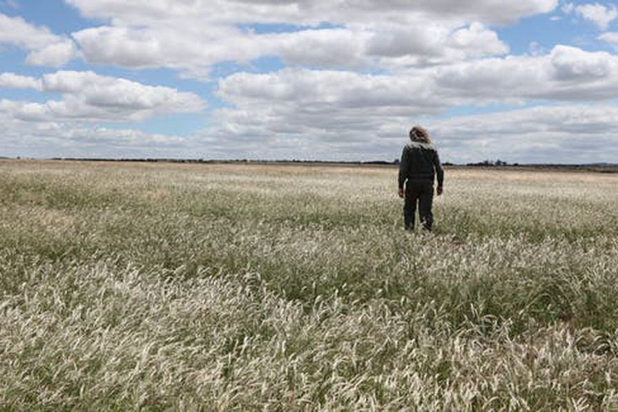 These historic grasslands are becoming a weed-choked waste – it could be one of the world's great parks