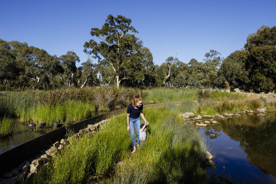 Oaklands Park & Wetland by TCL (Taylor Cullity Lethlean)