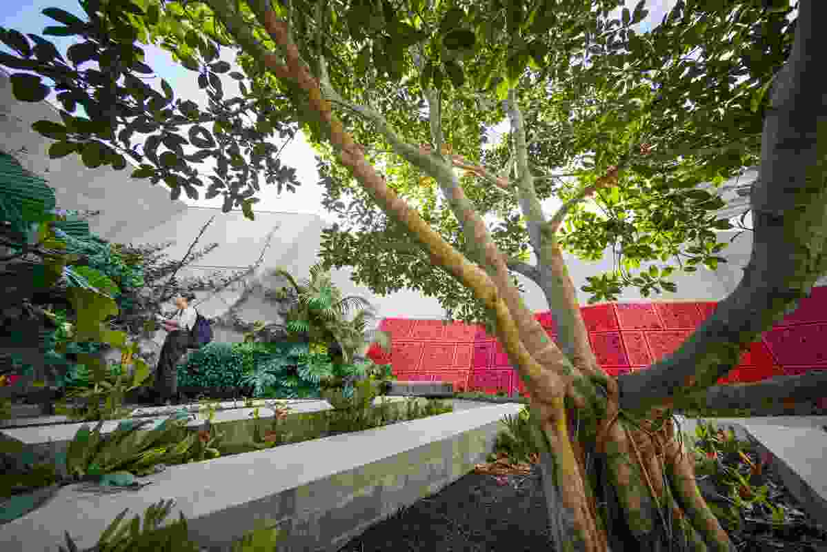 A mature Ficus rubiginosa (Port Jackson fig) is the centrepiece to the Terrace Courtyard, offering shade and dappled light over the concrete plinth seating.