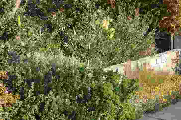 The house's front garden spills toward the street, blurring the boundaries between the public and private realms; planting references the site's former ecology.