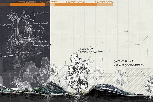 These sections demonstrate not only how the design works spatially but most critically how ecological succession changes the design at the scale of the site. To explore these changes in detail, I selected five key areas to showcase five succession patterns.