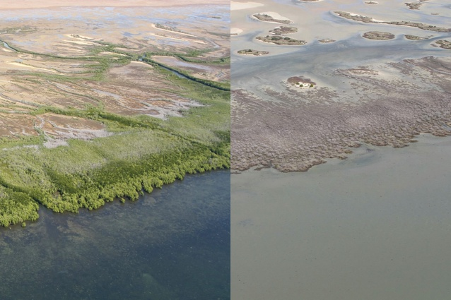 Aerial views of seaward mangrove fringes showing foreshore sections of minor damage (left photo) and extreme damage (right photo) as observed in June 2016 between Limmen Bight River and McArthur River, Northern Territory.