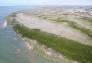 As mangroves of Australia's Gulf region have experienced relatively little anthropogenic impact, they are considered the least altered mangrove ecosystems in the world.