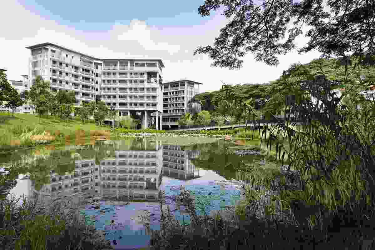 The residents of NTU's Pioneer and Crescent Halls can immerse themselves in the wetland habitat via a network of elevated boardwalks, seating decks and an experiential trail.